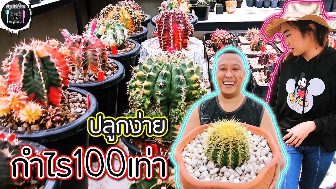 กระบองเพชร (Cactus) เกษตรยุคใหม่【กำไรโคตรดี】| ปลูกไปเรื่อย