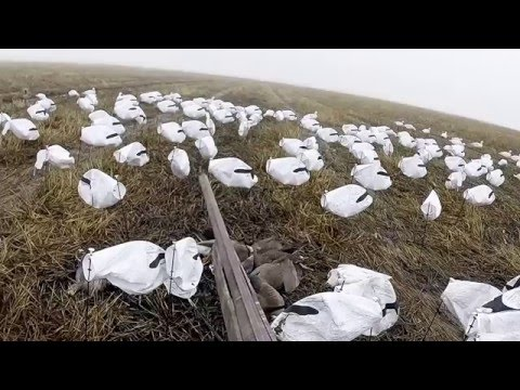 Butte County, Northern California Goose Hunt 12-2015