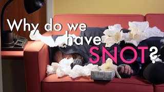 Why Do We Have Snot? (MIT Explains)