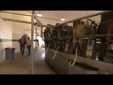 Intensive Dairy Farming - Is this the way to do it? (BBC Countryfile)