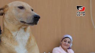 قصة سيدة تتبنى «كلاب الشوارع»