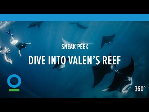 Sneak Peek: Dive into Valen's Reef (360 video) | Conservation International (CI)
