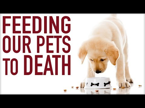 Can Pets Be Vegan?   What's REALLY in Pet Food