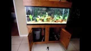 75 Gallon Fresh Water Aquarium With Fluval Fx5 Canister Filter Connected On A Built In Overflow Tank