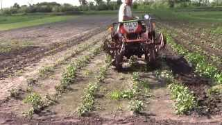 KUBOTA В10 самодельными ежиками по картошке