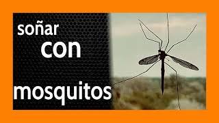 Soñar con Mosquitos 🦟 *** MENSAJES DE ADVERTENCIA*** ⚠️