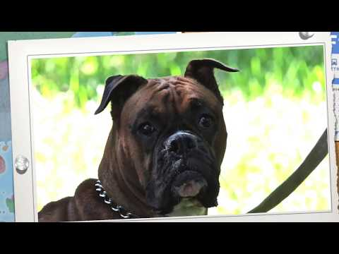 Aldens Kennels Dog Training Cook County, IL