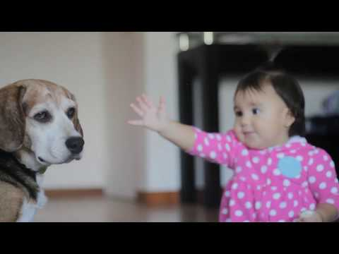 Cute Dog and his Little Humans | Are Beagles Good With Children/Babies?
