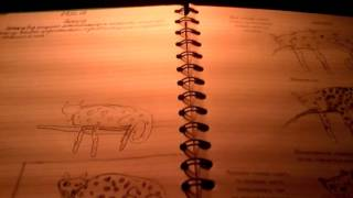 Учимся рисовать леопарда !!!!!!!!!!!!(, 2016-03-13T16:40:47.000Z)