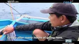 Mga peligrong kinakaharap ng mga mangingisda ng tuna