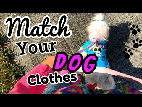 👠👗Matching clothes with your🎒🐶Dog, coton de tulear I Lorentix