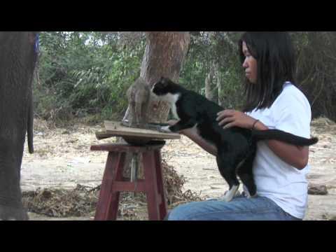 Cat Curious about an Elephant - Thailand