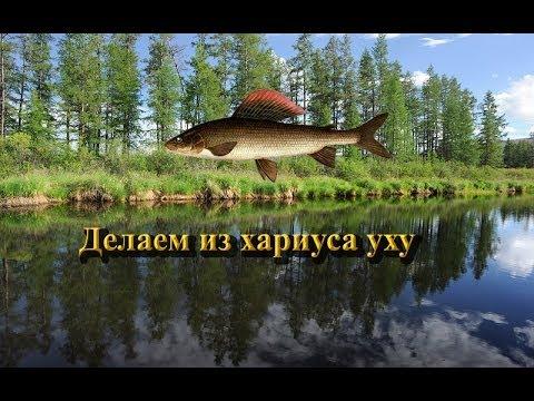 рыбалка 3.0 хариус