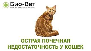 Острая почечная недостаточность у кошек. Ветеринарная клиника Био-Вет.