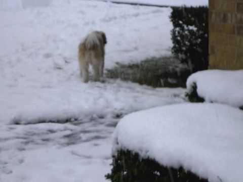 Allie Dog Finds Snowman