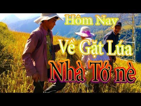 Nkauj Kho Siab| Hmoob moom hlais laj| Gặt Lúa Nha Sapa,vietnam 2017-2018 thumbnail