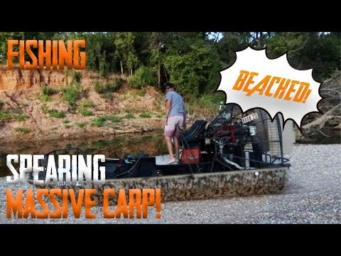 Spearing Massive CARP!!! (I BEACHED THE AIRBOAT)