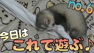 フェレット紹介動画はこちら♪ https://www.youtube.com/watch?v=8dtiFjt...
