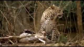 National Geographic Documentary Animals - The Jungle Wild Deadly Beast - National Geographic 2015 HD