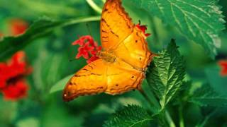 Ricky King - Butterfly