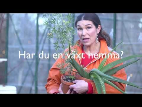 VIDEOHJÄLPEN - OdlingsTV livesänder för Videohjälpen