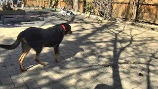 Outside Dog Yard Cam 03-22-2018 09:00:34 - 10:00:35