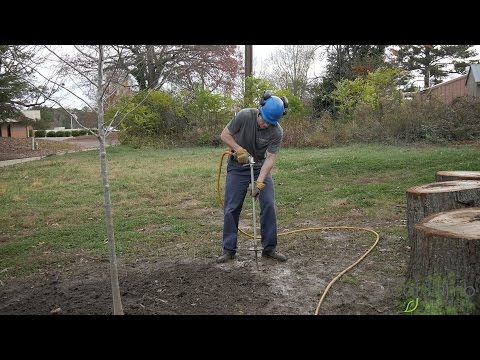How To Create Healthy Soil For Your Trees & Shrubs