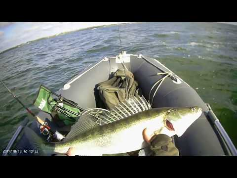 Осенняя рыбалка на судака Калининградский залив