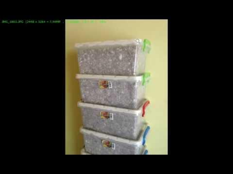 Мицелий вешенки в пищевых контейнерах, ХОРОШИЙ ПРИМЕР