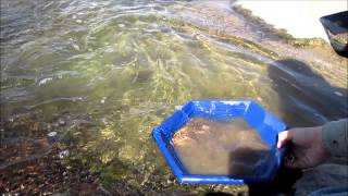 Gold Panning and metal detecing the Slab on the Llano River