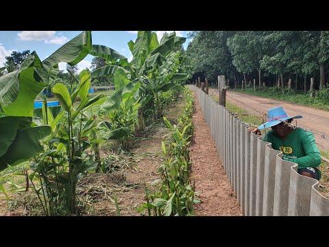 หลายคนสงสัย กับเทคนิควิธีการล้อมสวนสวยด้วยกระเบื้องเก่า และแนวคิดดีๆ ในการทำสวนเกษตรผสมผสาน