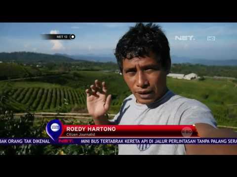 Citizen Journalist - Menikmati Pemandangan Indah Wisata Kebun Teh Malino - NET 12