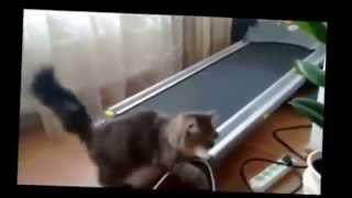 Смешные, озорные кошки