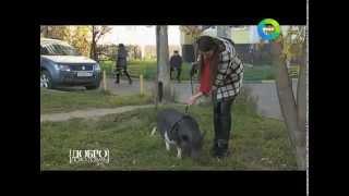 К чему приводит любовь к животным