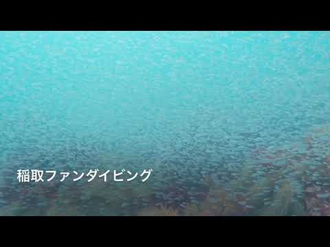[藤三]ネンブツダイの群れ20200922