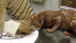 видео Государственный Дарвиновский музей