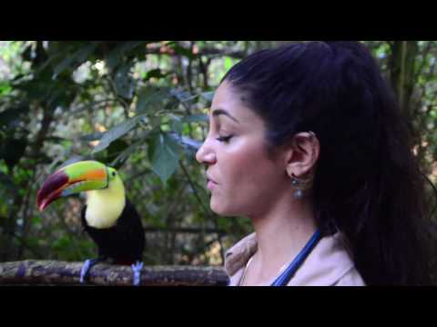 Learning About the Rainbow Billed Toucan from Runt the Toucan
