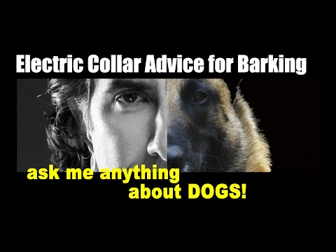 Correcting My Dog with E-Collar for Barking - Dog Training Video - ask me anything