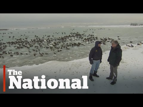 Cold Weather Killing Birds in Canada