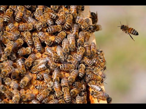 شركة تونسية تطور أداة ذكية لحراسة النحل في الليل والنهار  - نشر قبل 56 دقيقة