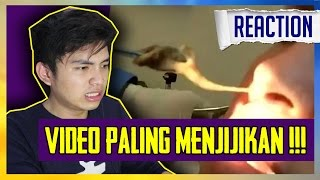 Video VIDEO PALING MENJIJIKAN !!! download MP3, 3GP, MP4, WEBM, AVI, FLV April 2018
