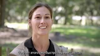 Хищники Серенгети (Документальный фильм)