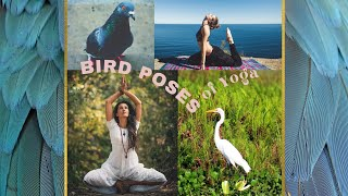 Bird Poses of Yoga | Real Well
