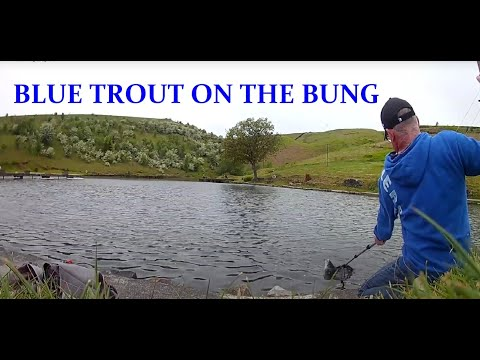 Fly Fishing Blue Trout Bung Indicator Method | Pennine Trout Fishery UK