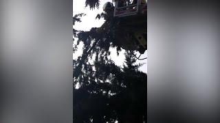 Bomberos de la DPZ rescatan en Tarazona a un gato atrapado