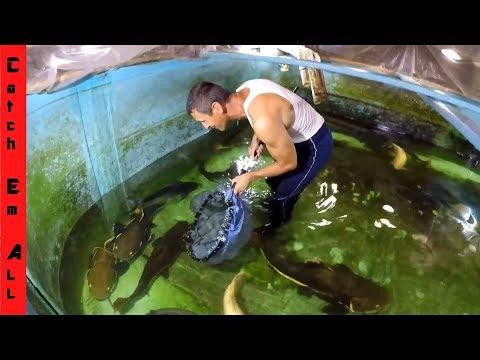 FISH RESCUE AQUARIUM! Going into the Monster Fish Tank! thumbnail