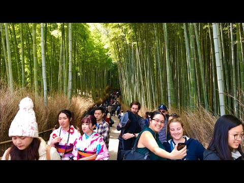 2019年3月26日(火) 京都嵐山の観光風景 ☆ Arashiyama  Kyoto ☆ 岚山   Арашиямы