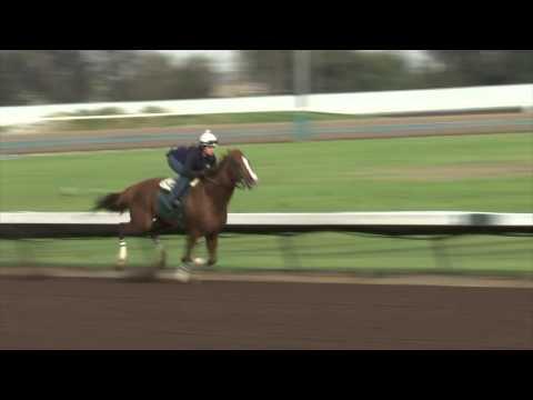 Kentucky Derby Champ California Chrome Work On 2/27