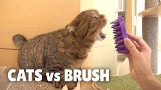 cats-vs-brush
