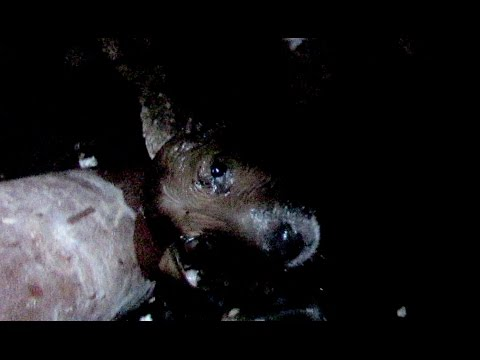 Drowning puppy rescued from sewage tank